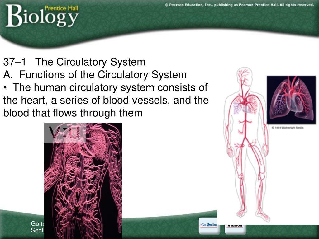 37–1The Circulatory System