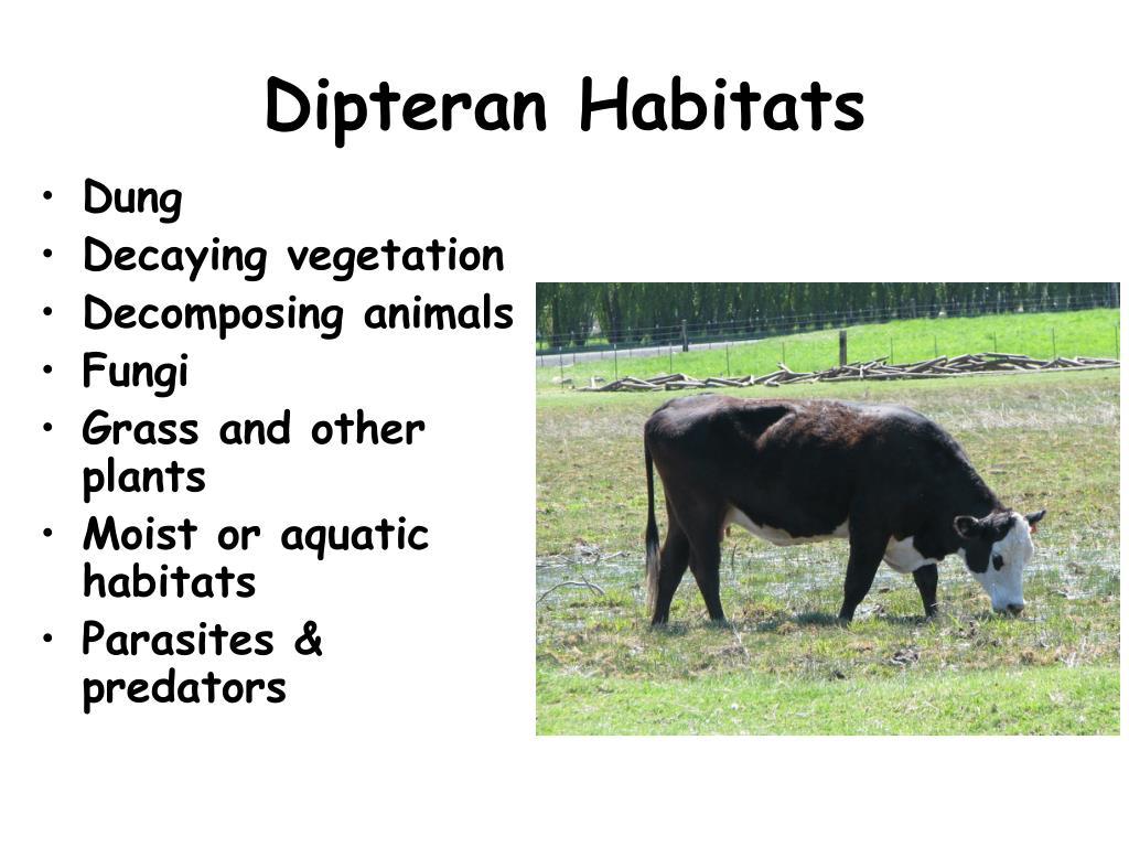 Dipteran Habitats