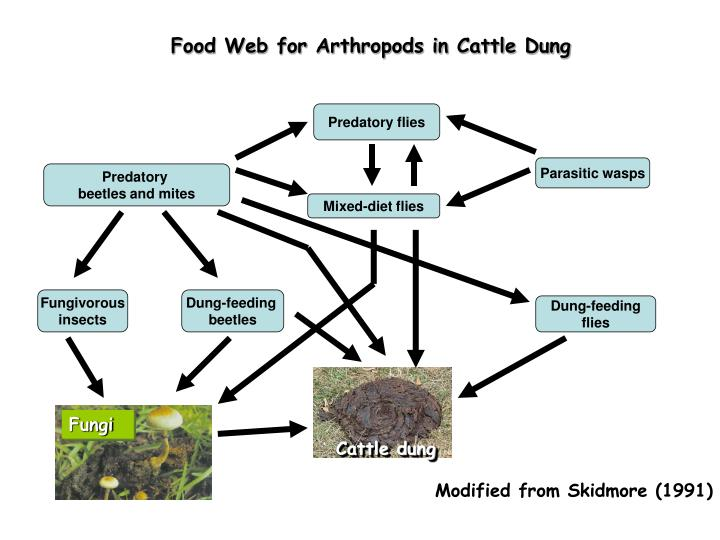 Food Web for Arthropods in Cattle Dung