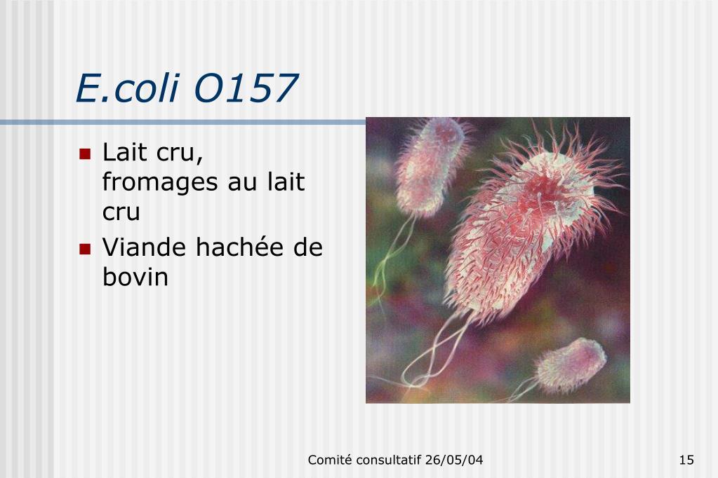 E.coli O157