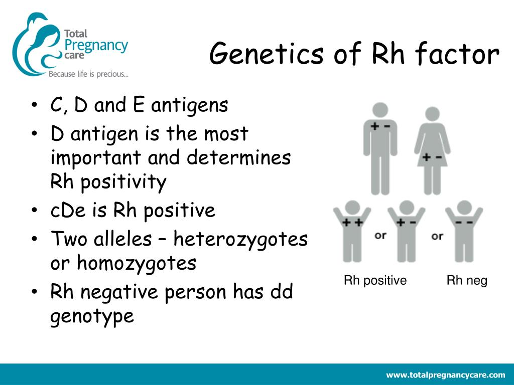 Genetics of Rh factor