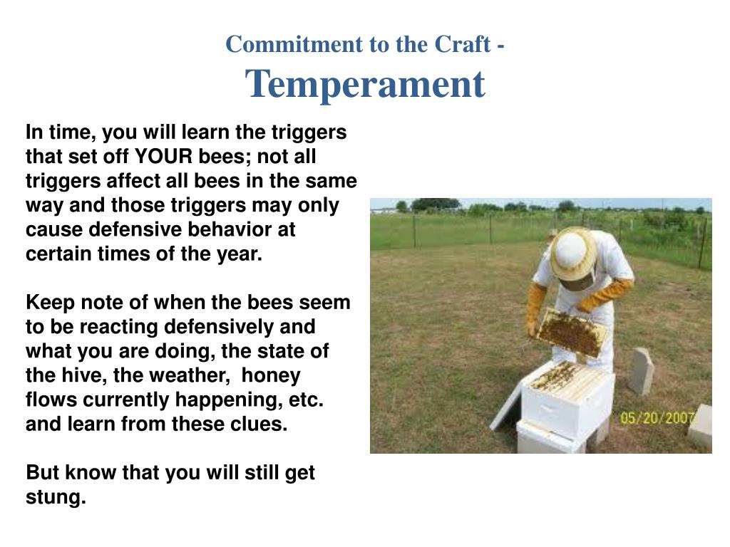 Commitment to the Craft -