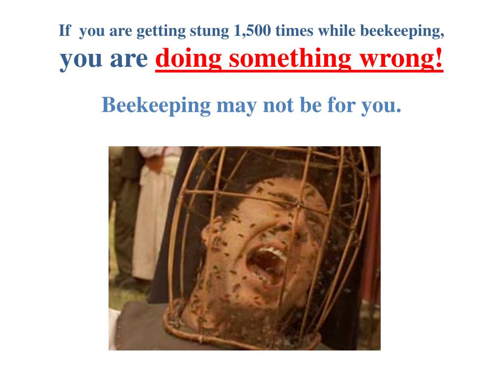 If  you are getting stung 1,500 times while beekeeping,