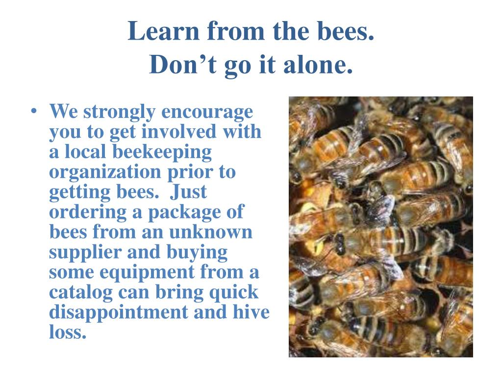 Learn from the bees.