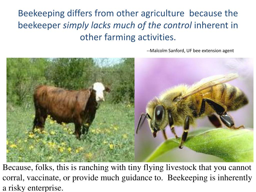 Beekeeping differs from other agriculture  because the beekeeper