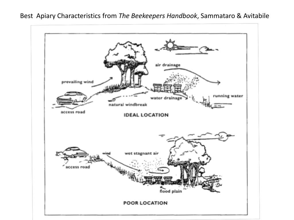 Best  Apiary Characteristics from