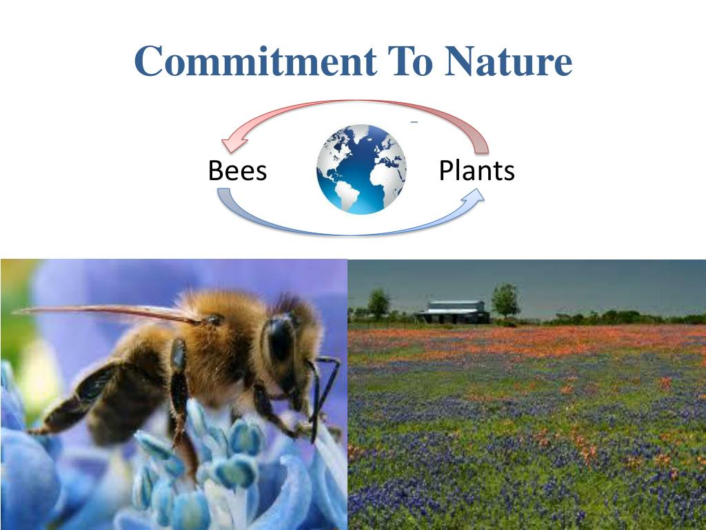 Commitment To Nature