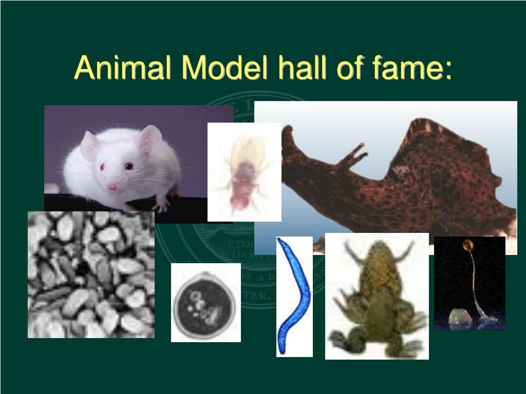 Animal Model hall of fame: