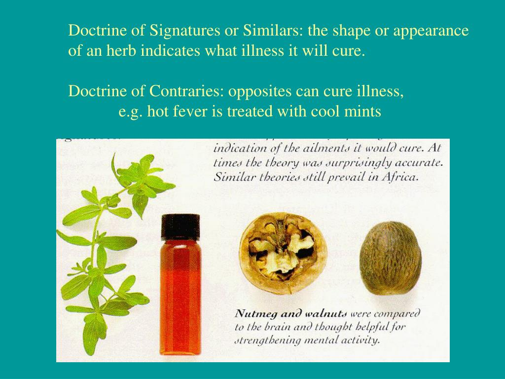 Doctrine of Signatures or Similars: the shape or appearance
