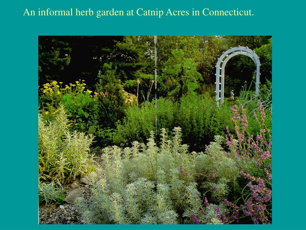 An informal herb garden at Catnip Acres in Connecticut.