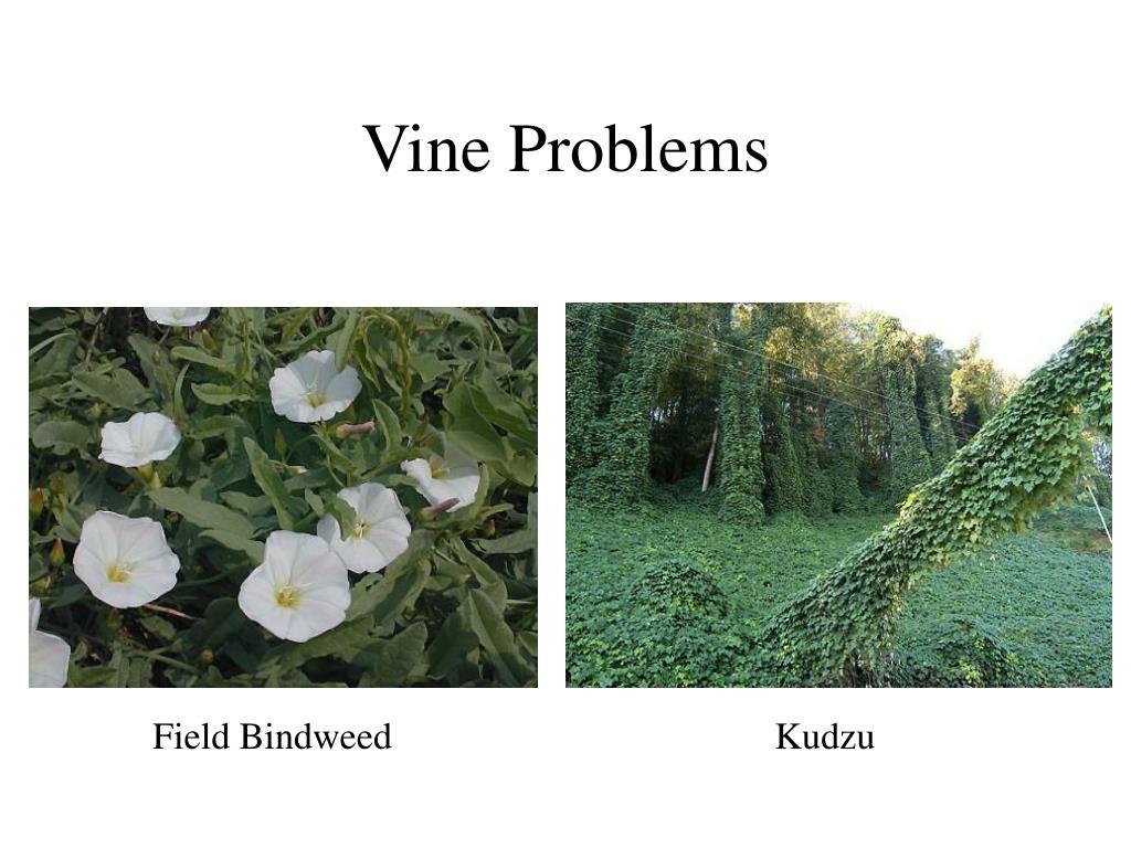 Vine Problems