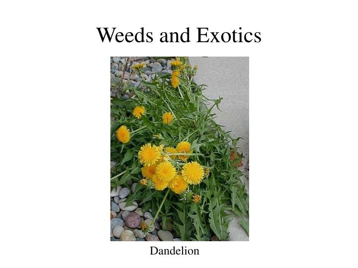 Weeds and exotics
