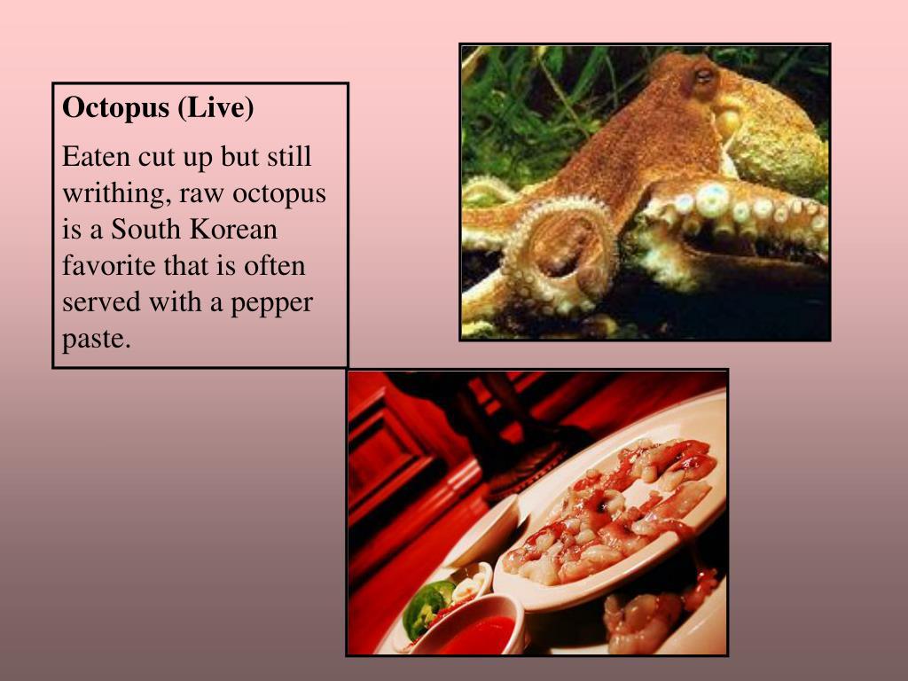 Octopus (Live)