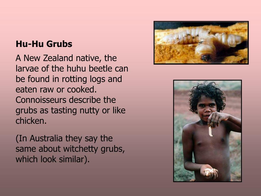 Hu-Hu Grubs