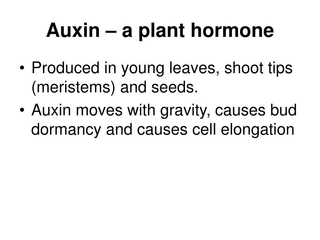 Auxin – a plant hormone