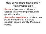 how do we make new plants plant propagation