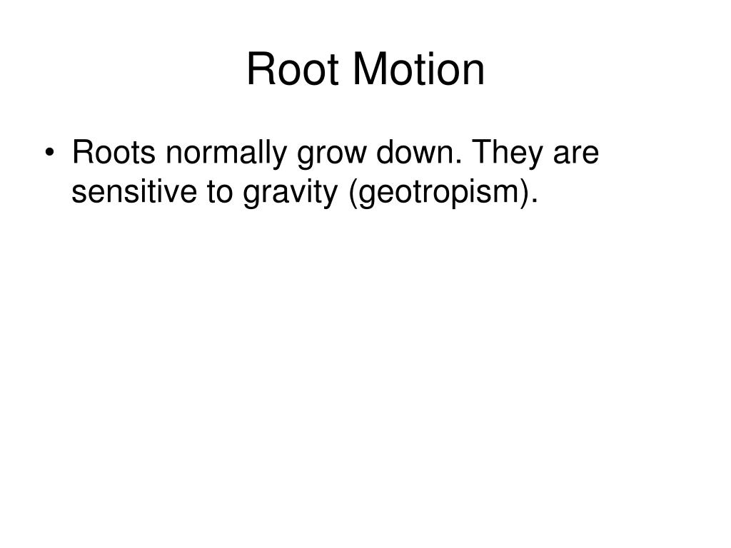 Root Motion