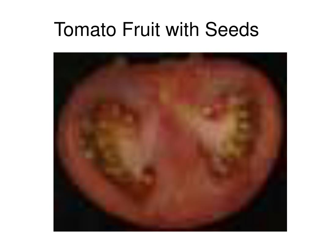 Tomato Fruit with Seeds