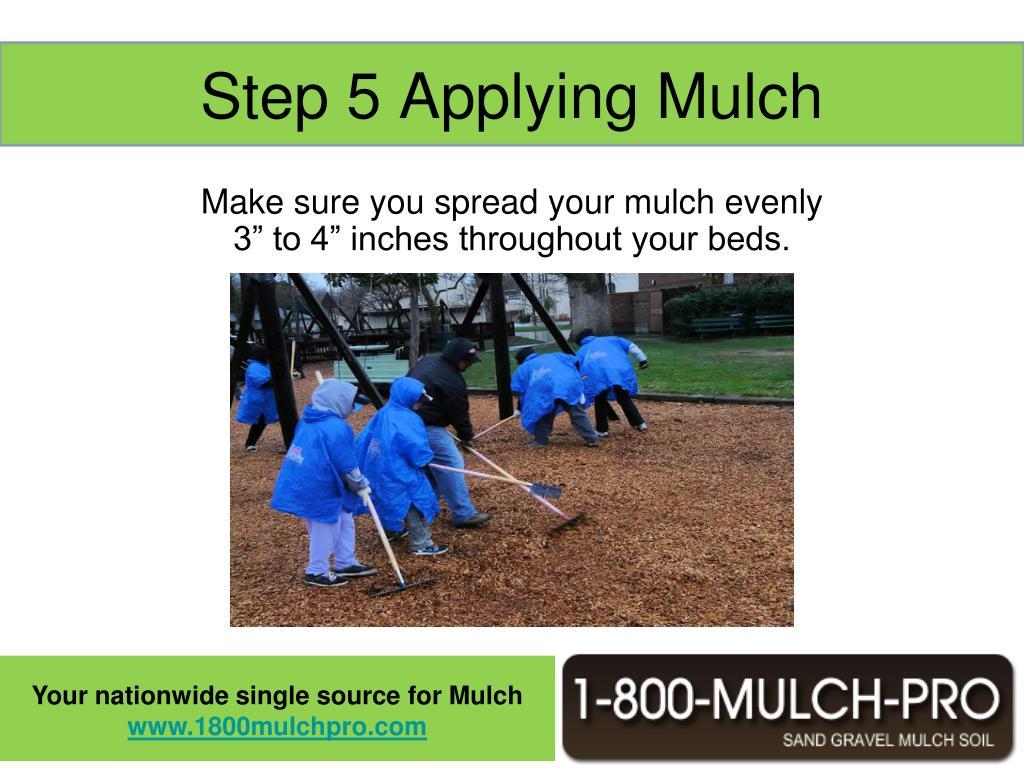 Step 5 Applying Mulch