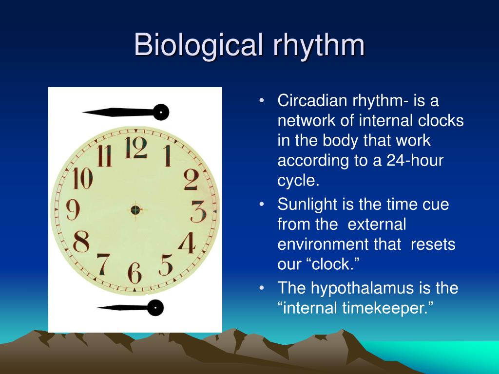 biological rhythm Using fruit flies as a model organism, this year's nobel laureates isolated a gene  that controls the daily biological rhythm pictwittercom/.