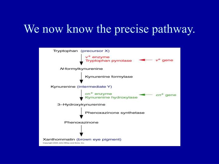 We now know the precise pathway.