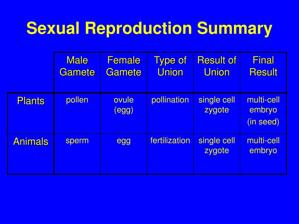 Sexual Reproduction Summary