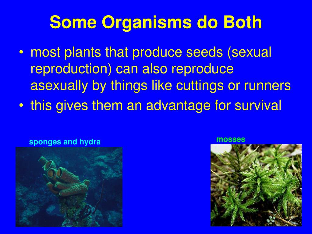 Some Organisms do Both