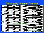 cloning by nuclear transfer