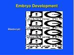 embryo development11