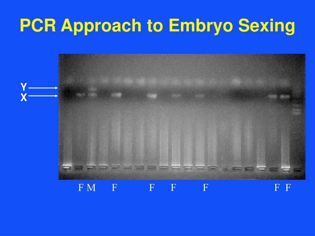 PCR Approach to Embryo Sexing