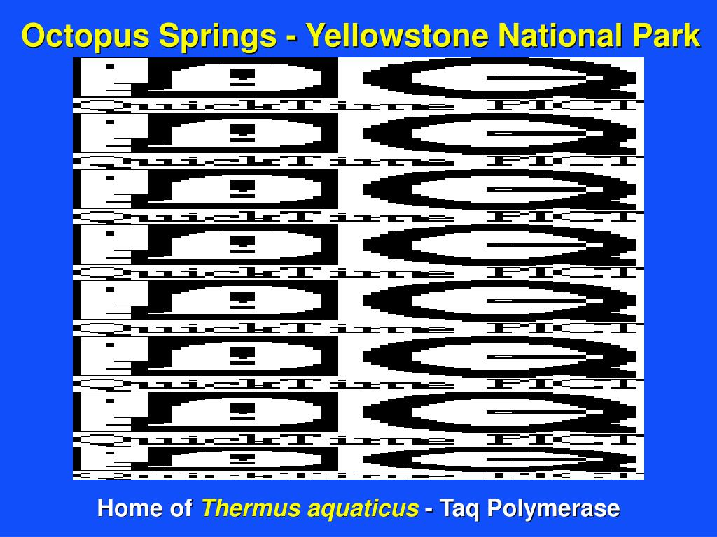 Octopus Springs - Yellowstone National Park
