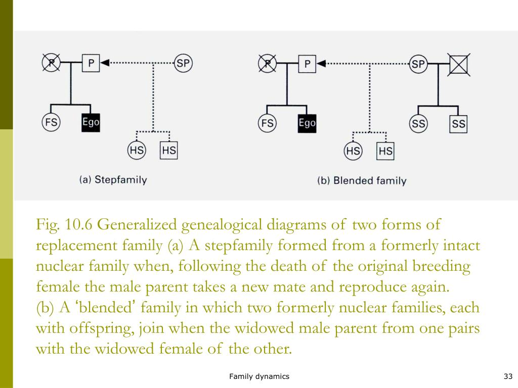 Fig. 10.6 Generalized genealogical diagrams of two forms of replacement family (a) A stepfamily formed from a formerly intact nuclear family when, following the death of the original breeding female the male parent takes a new mate and reproduce again.
