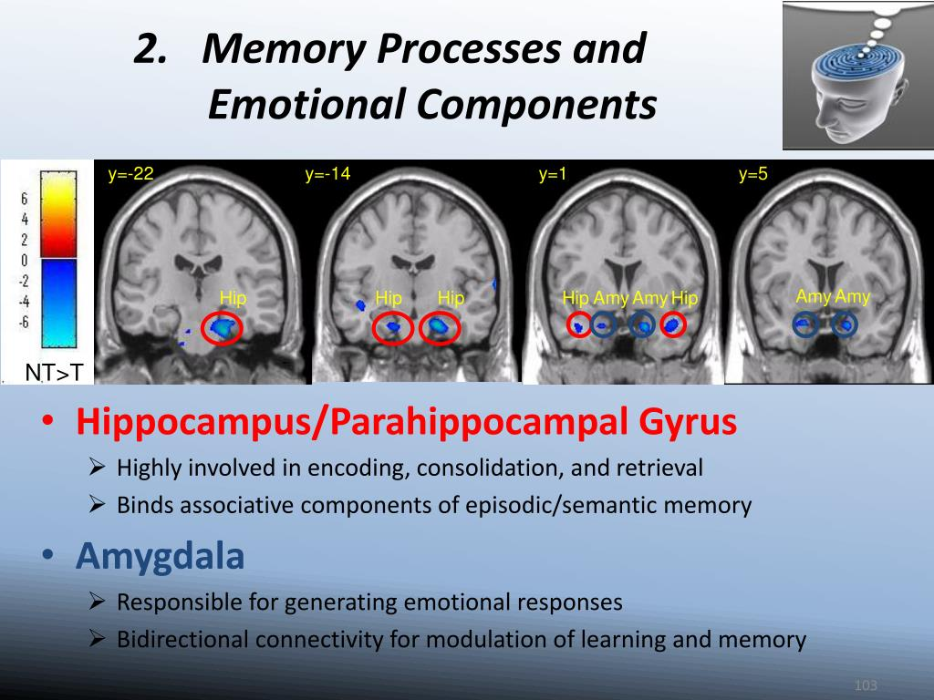 2.   Memory Processes and Emotional Components
