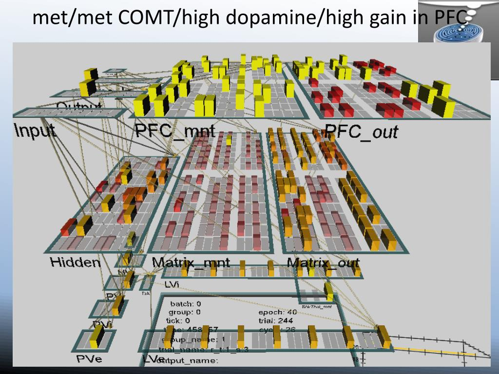 met/met COMT/high dopamine/high gain in PFC