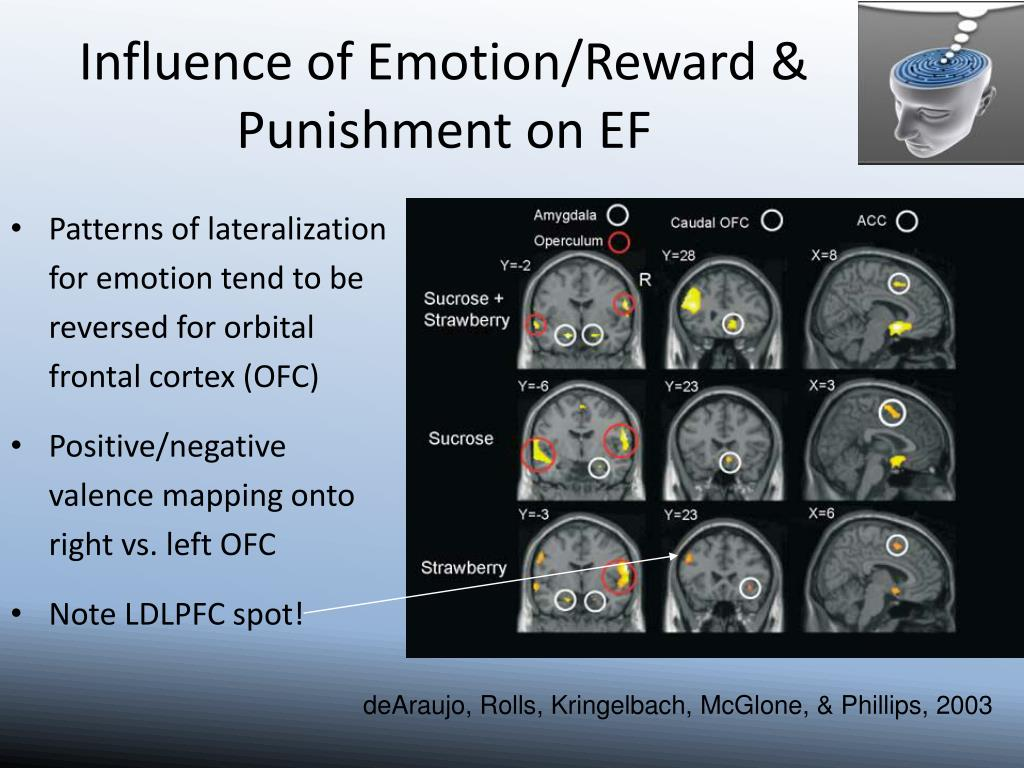 Patterns of lateralization for emotion tend to be reversed for orbital frontal cortex (OFC)