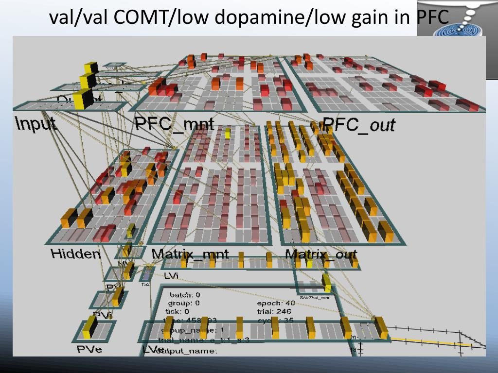 val/val COMT/low dopamine/low gain in PFC