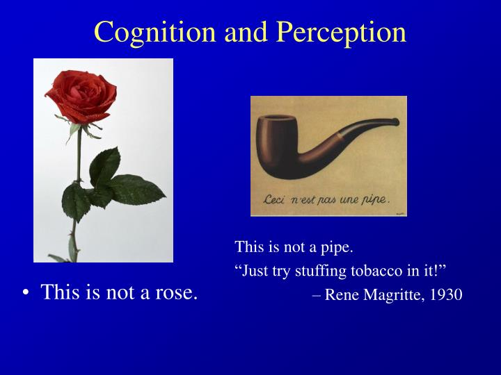 Cognition and perception l.jpg