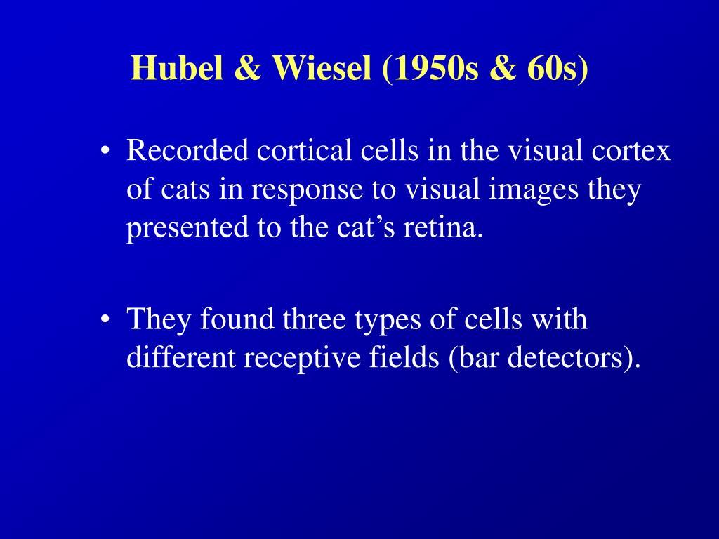 Hubel & Wiesel (1950s & 60s)