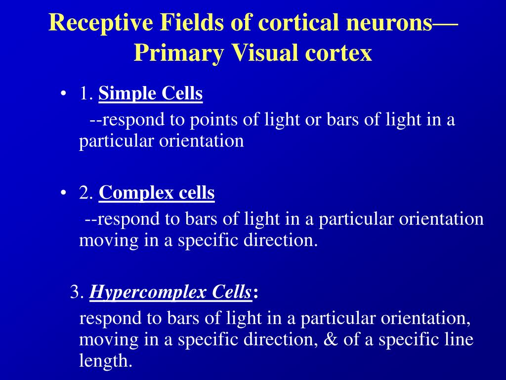 Receptive Fields of cortical neurons—Primary Visual cortex
