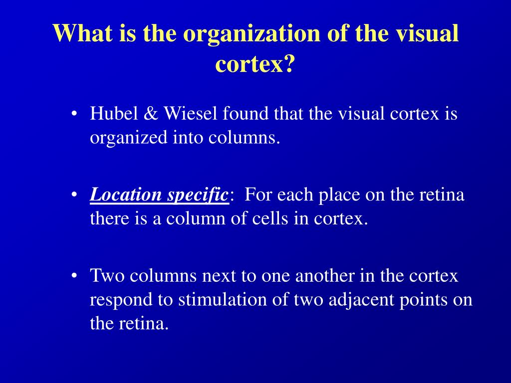 What is the organization of the visual cortex?