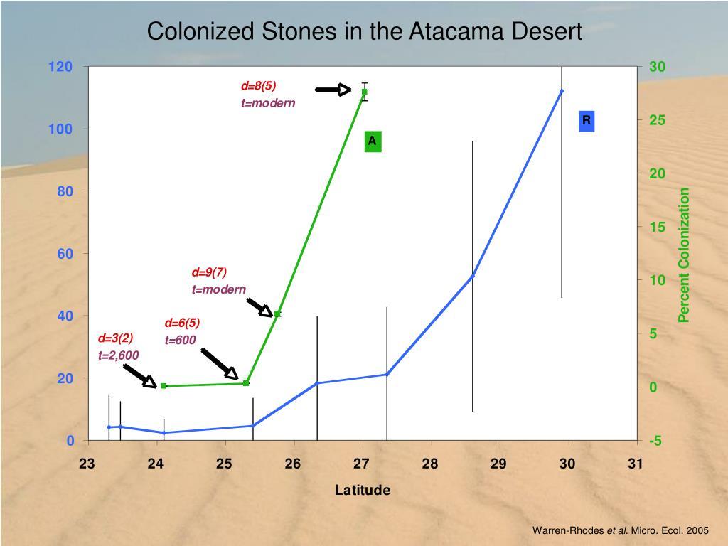 Colonized Stones in the Atacama Desert