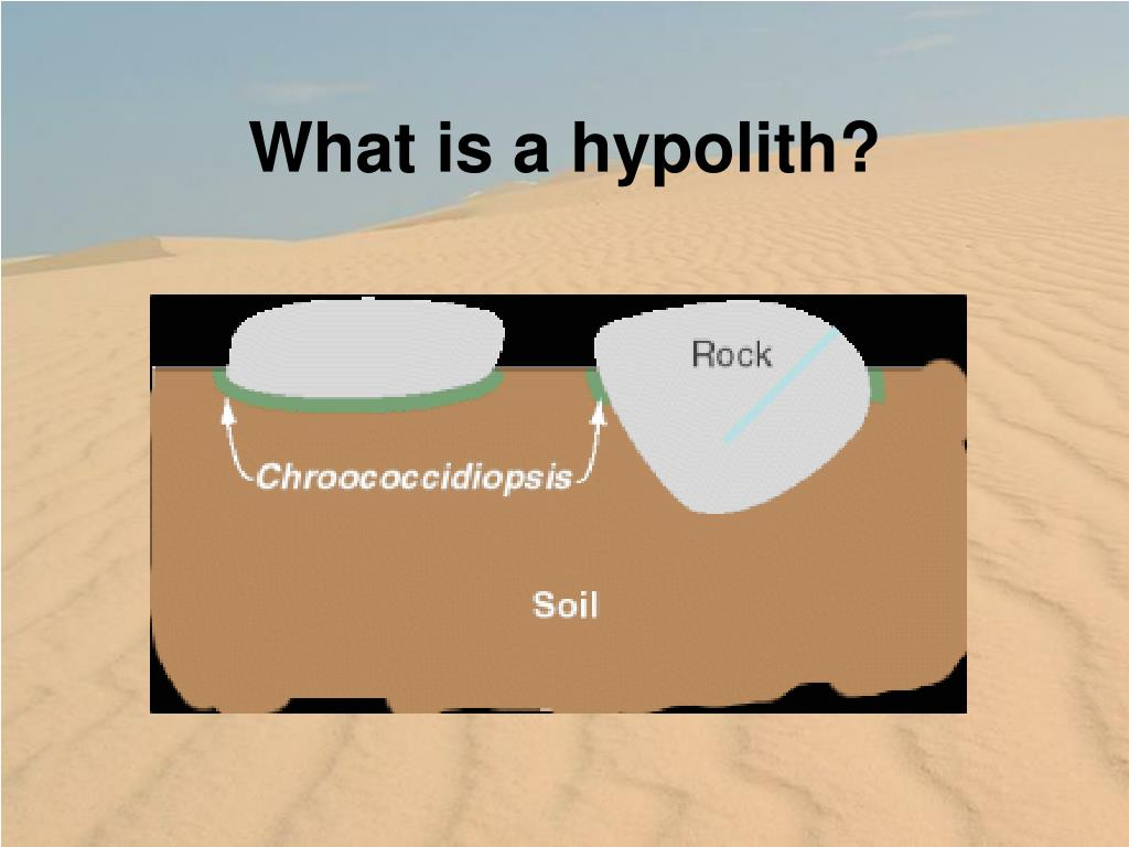 What is a hypolith?