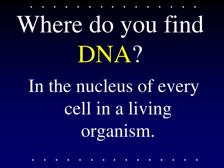 Where do you find dna