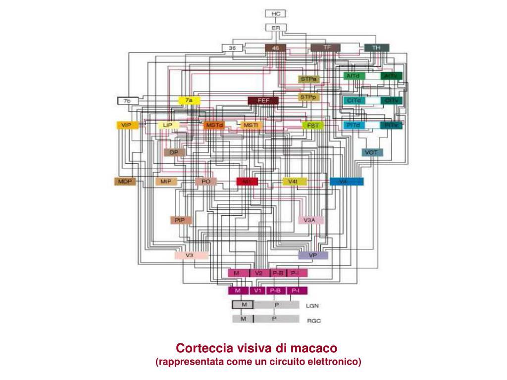 Corteccia visiva di macaco