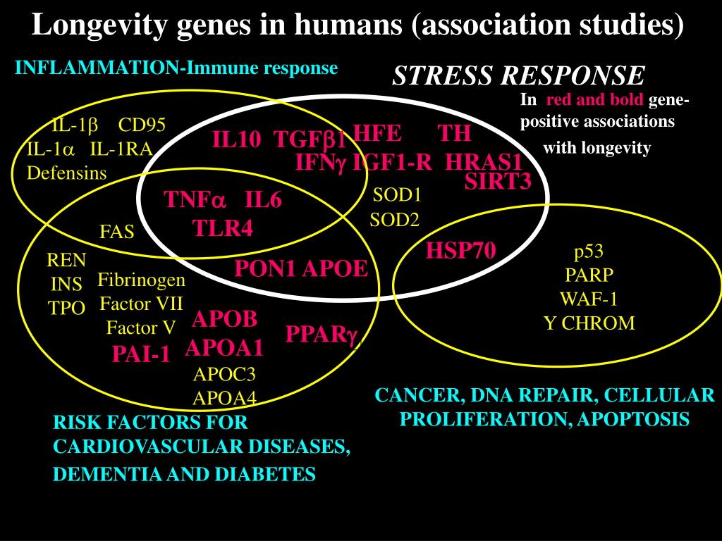 Longevity genes in humans (association studies)