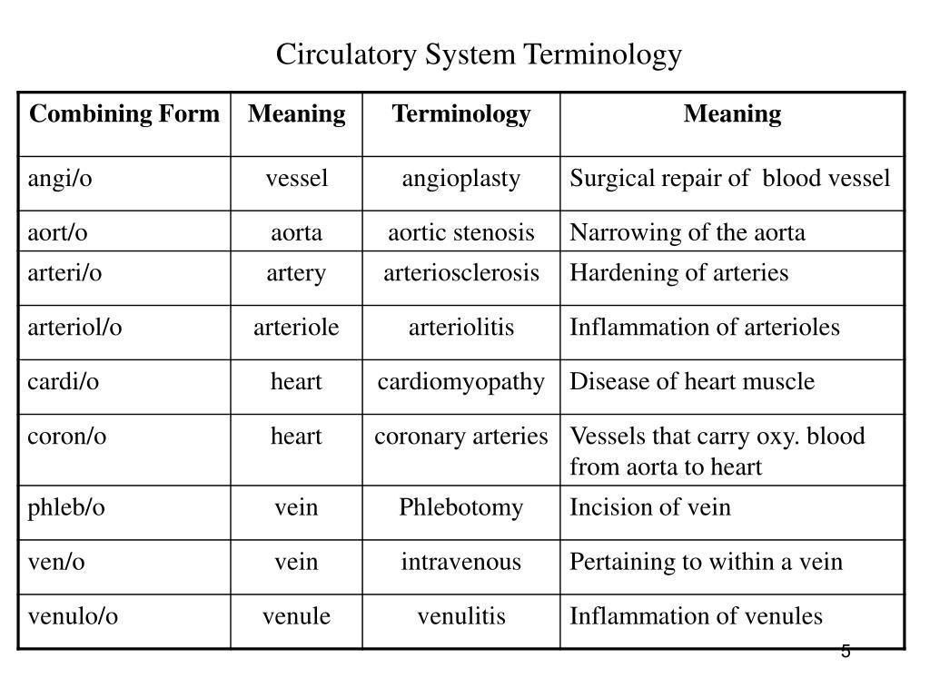 Circulatory System Terminology
