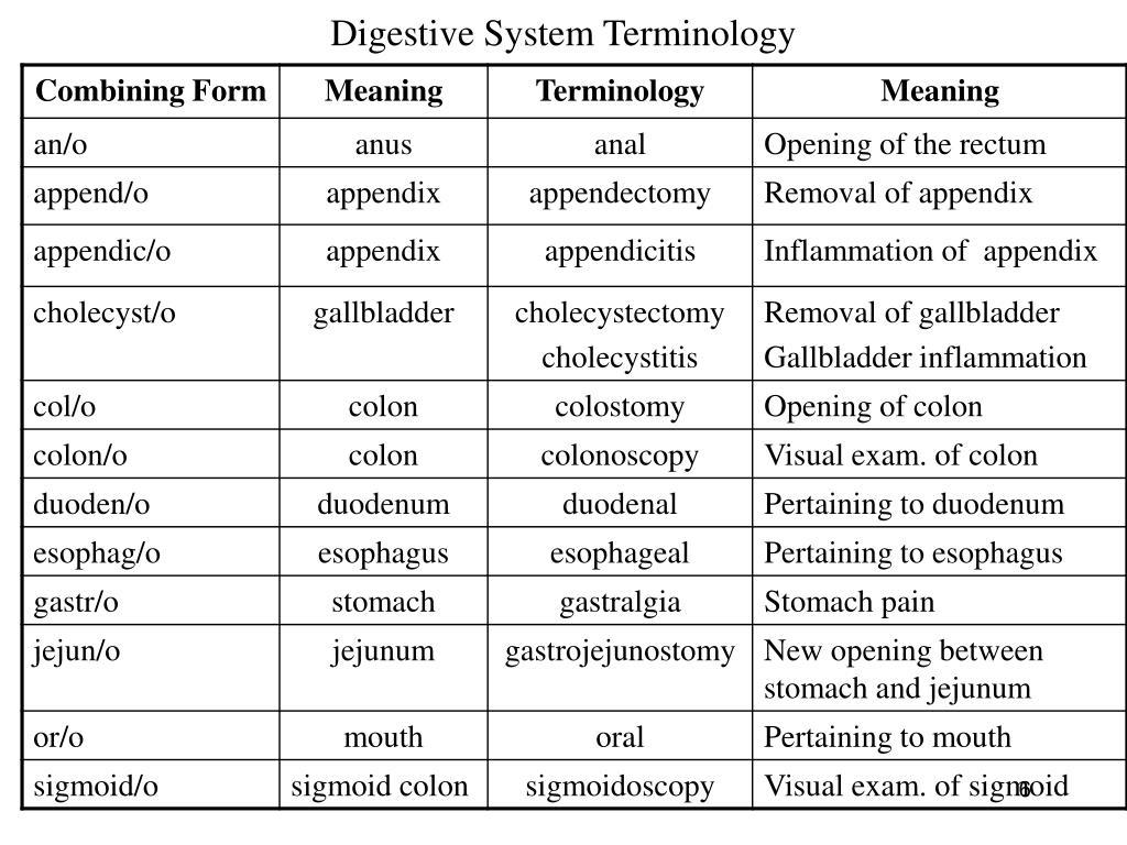 Digestive System Terminology