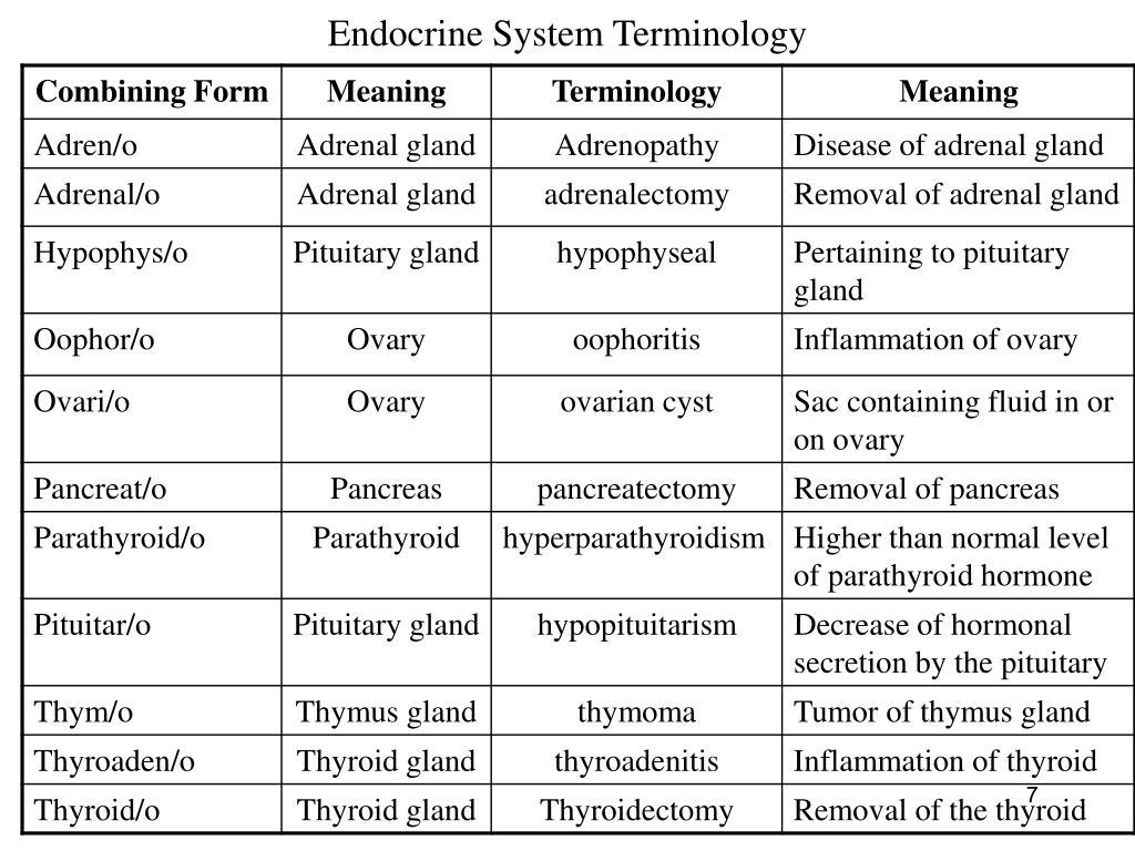 Endocrine System Terminology