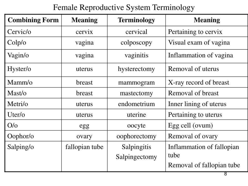 Female Reproductive System Terminology
