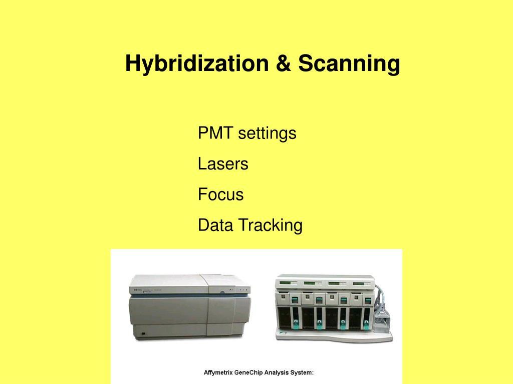 Hybridization & Scanning
